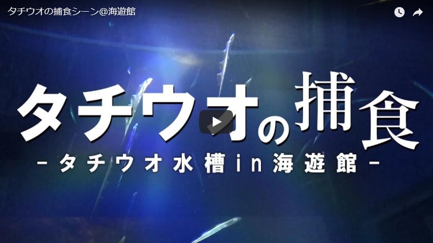 動画で見る「太刀魚」の捕食