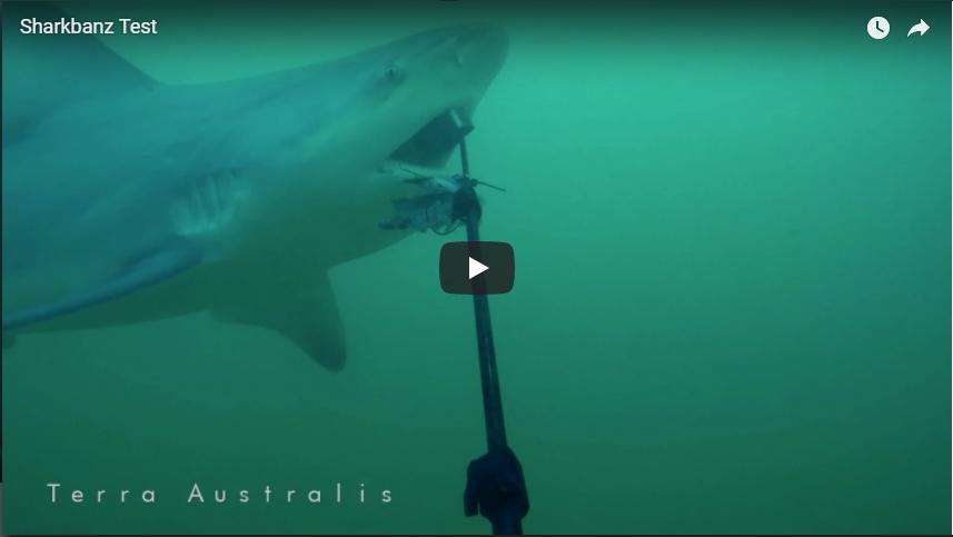 サメ避け SHARKBANZ(シャークバンズ)は効くのか検証
