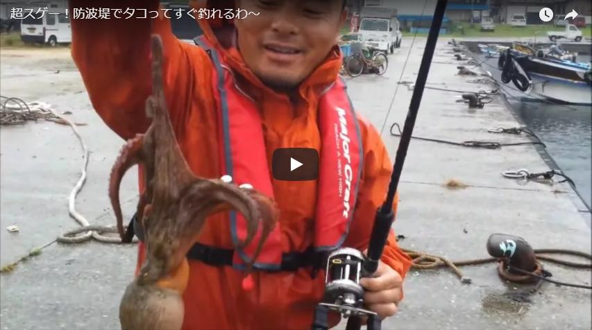 タコパラ使って防波堤から簡単にタコを釣りまくる